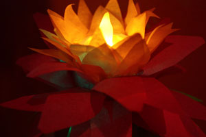weak lotus lanterns